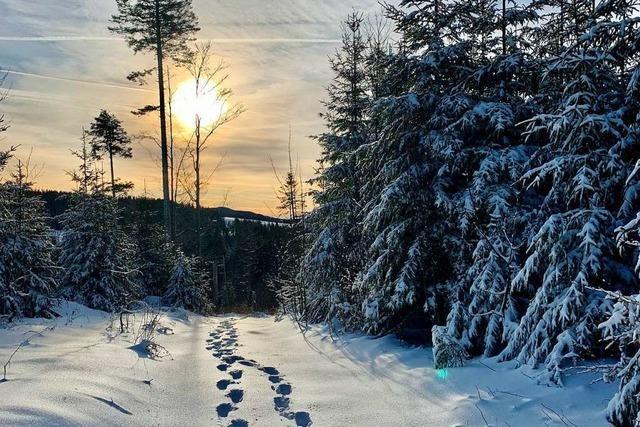 Gezuckerter Wald bei der Stübenwasen-Loipe