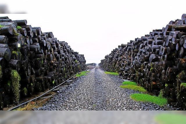 Nasslager soll Holzqualität sichern