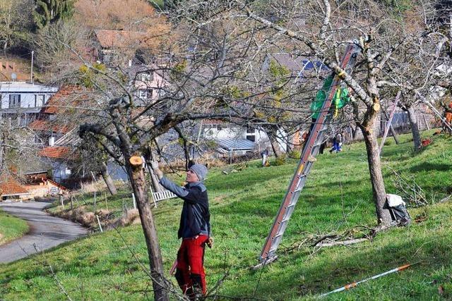 Streuobstbestände im Landkreis Lörrach sind akut gefährdet