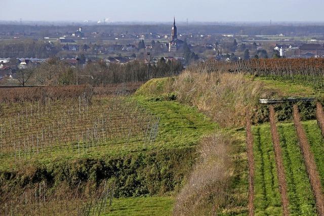 Rebberge bei Friesenheim