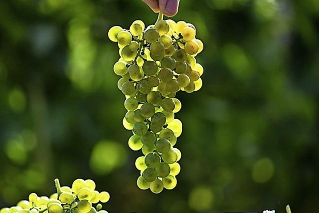 Mehr alternative Methoden im Weinbau