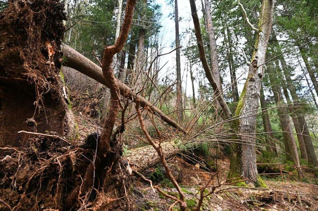 An vielen Stellen in der Region hat de... hier in Todtnau Schäden hinterlassen.  | Foto: Jonas Hirt