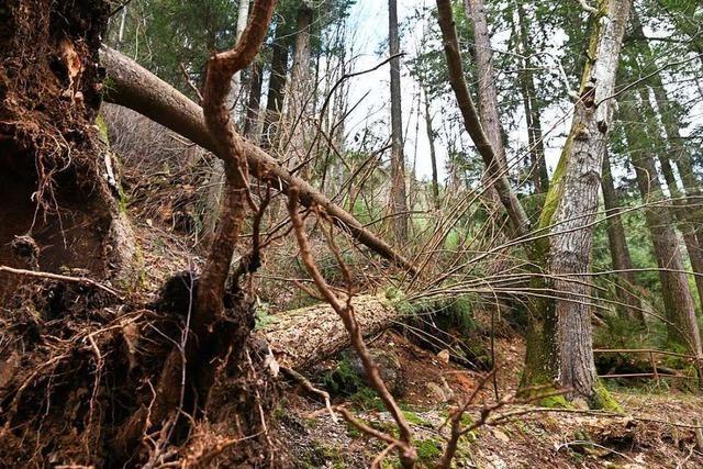 Forstarbeiter bei Aufräumarbeiten in Langenordnach schwer verletzt