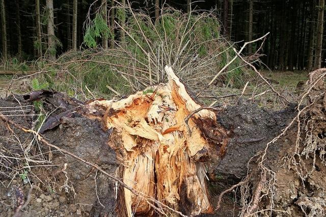 Waldbesitzer kommen mit einem blauen Auge davon