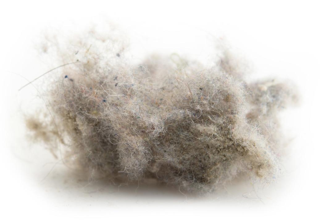 Sieht irgendwie puschelig aus, ist aber Staub: eine sogenannte Wollmaus  | Foto: Kenjo - stock.adobe.com