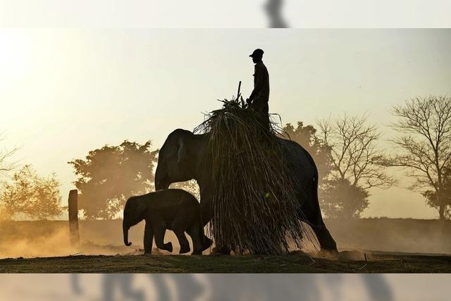 UN-Konferenz zum Schutz bedrohter Tiere