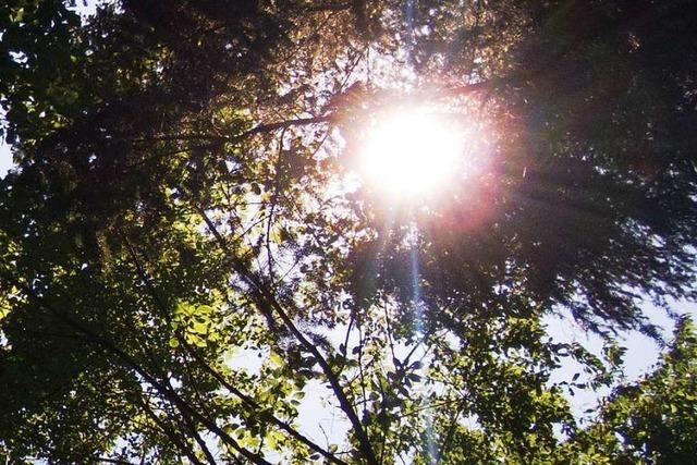 Förster: Waldspaziergang wieder möglich – auf eigene Gefahr