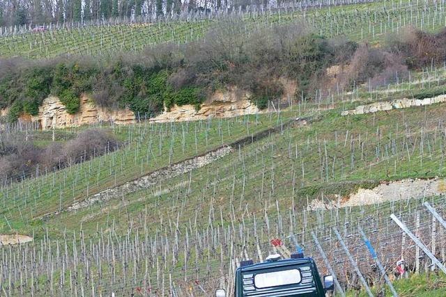 Das Weingut am Klotz will biologisch erzeugen