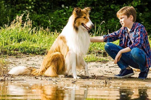 Die Hundeheldin Lassie ist zurück im Kino