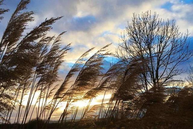 Tolles Licht beim Köndringer Baggersee