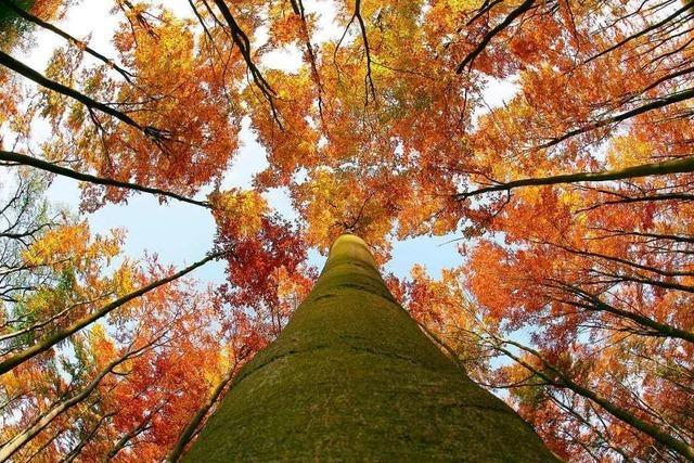 Die Finnen preschen beim Klimaschutz voran