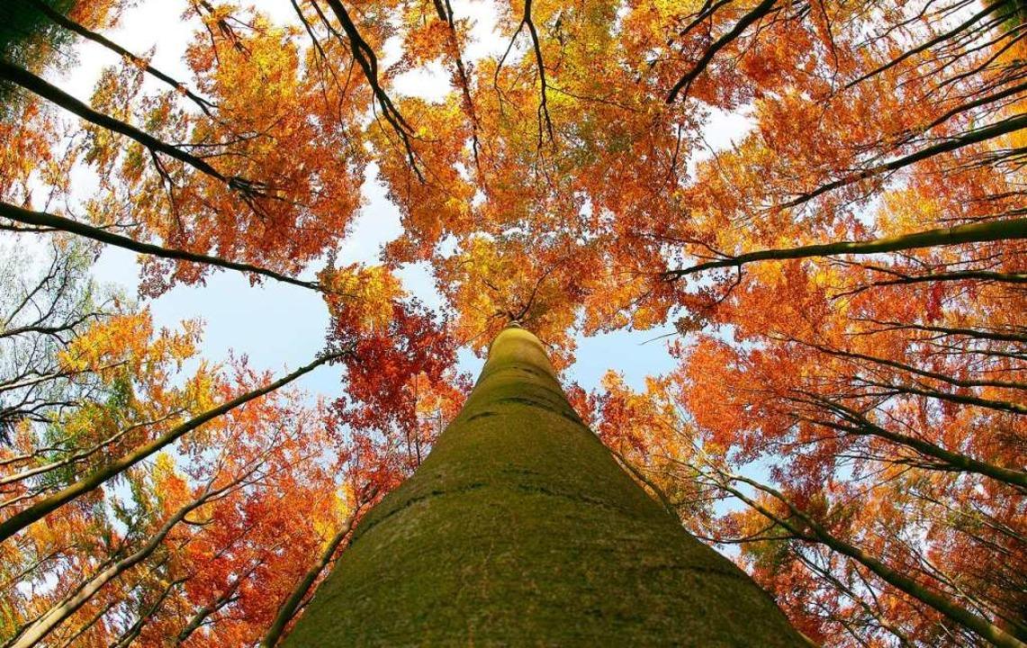 Zwei Drittel der Fläche Finnlands sind mit Wald bedeckt.  | Foto: Patrick Pleul