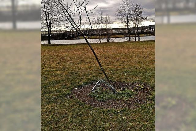 Spenderbäume beschädigt