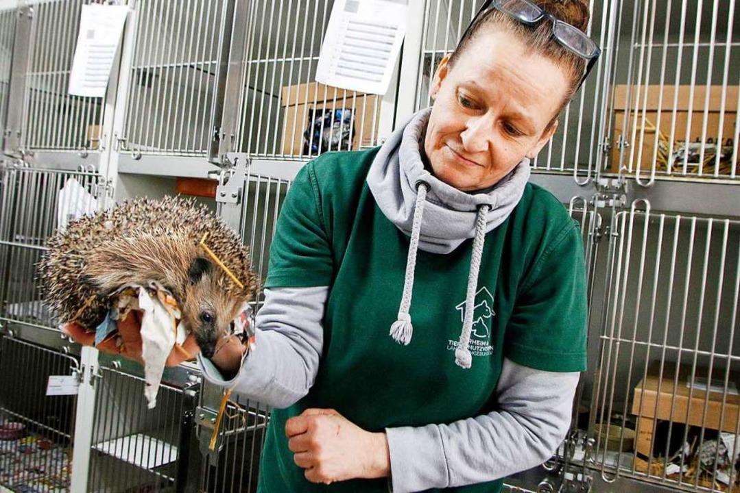Eine Mitarbeiterin des Tierheims zeigt...wurde extra eine Station eingerichtet.  | Foto: Heidi Fößel