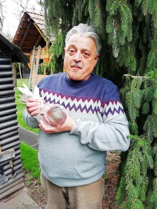 Gerhard Renkert mit einer Brieftaube, so ähnlich sah sein Bubi aus.  | Foto: Ulrike Derndinger