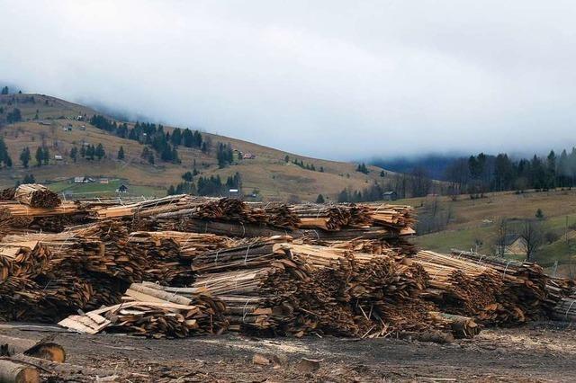 Der Robin Wood von Moldovita: Ein Mann kämpft gegen illegale Holzfällerei