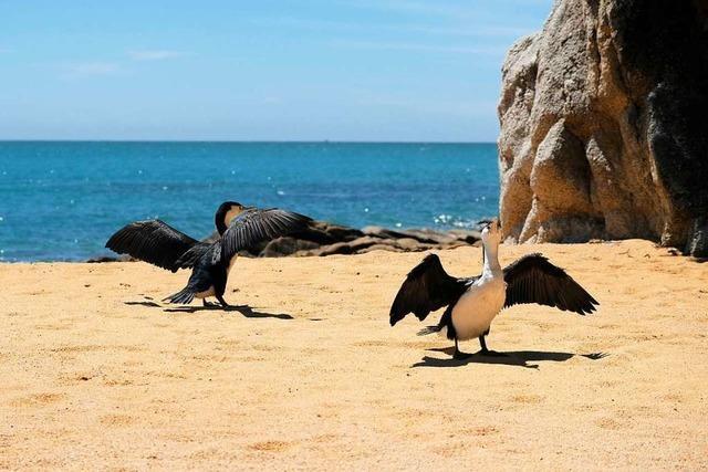 Die Welt ohne uns: Ein Nationalpark findet den Weg zurück zur Natur
