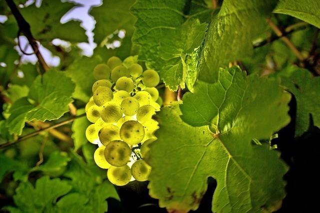 Naturschutz durch Weinbau