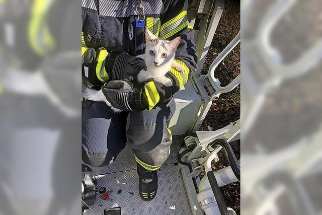 Kätzchen vom Baum in Waldkirch gerettet