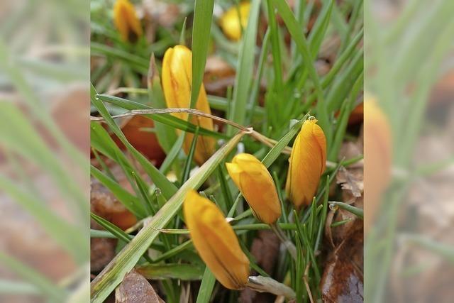 Der Frühling schnuppert