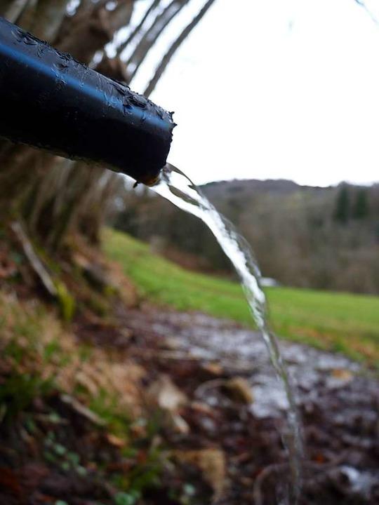 Eine kleine Quelle versorgt die Weiden mit Wasser.  | Foto: Sattelberger