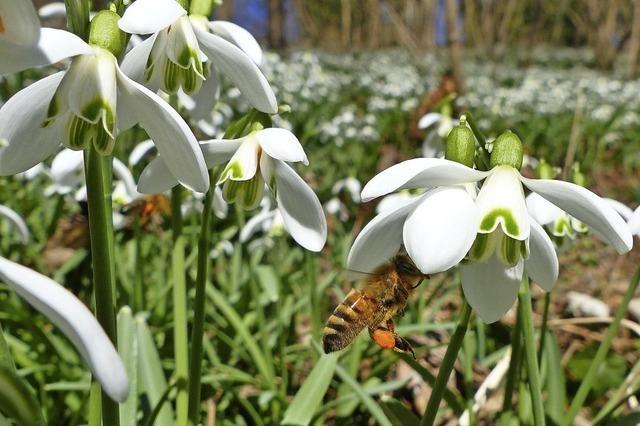 Frühling im Taubergießen