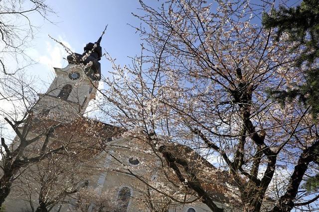 Kirschblüte in Friesenheim