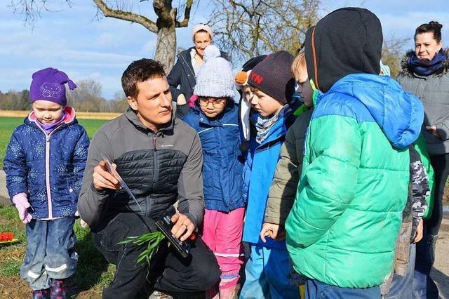 Kinder lernen, wie Winterweizen wächst
