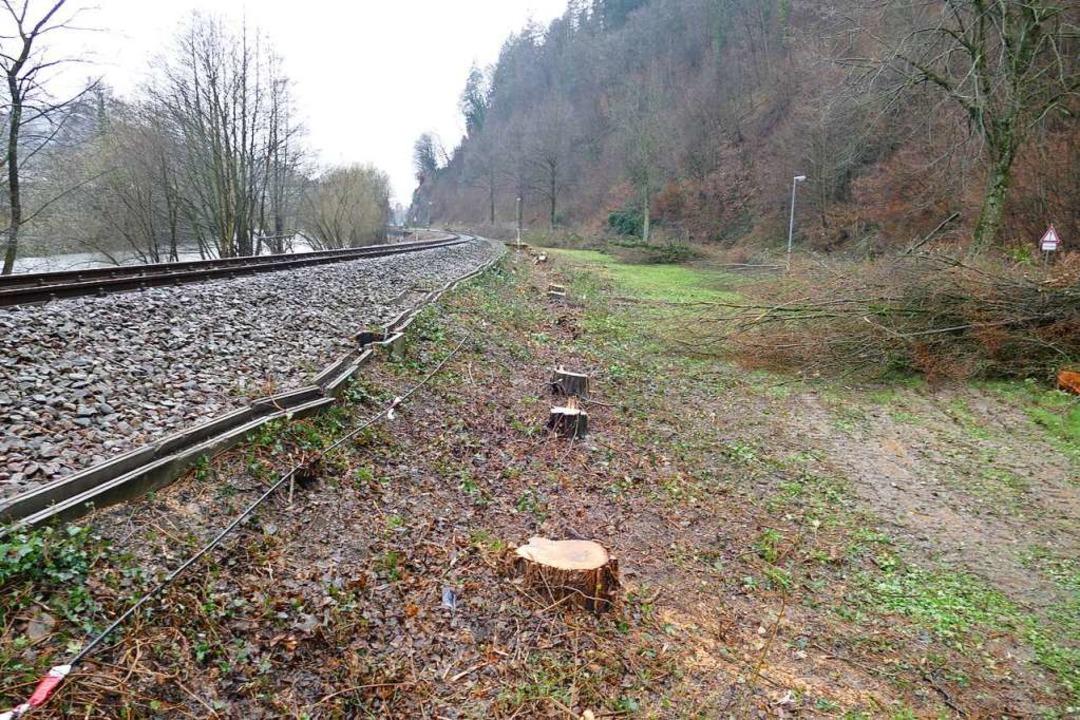 Die Bäume zwischen dem Bahnhof Waldkir...Hier wird das Gleisbett neu aufgebaut.  | Foto: Sylvia Sredniawa