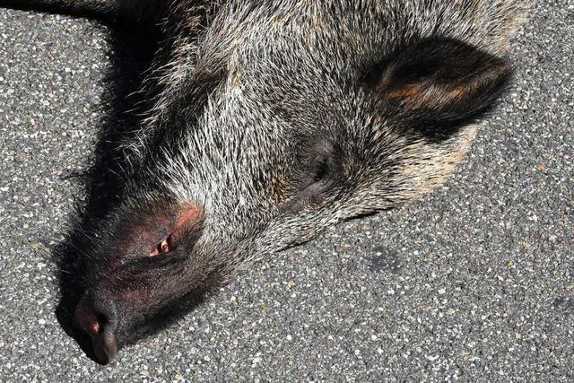 In Schwörstadt soll eine Verwahrstelle für tote Wildtiere eingerichtet werden