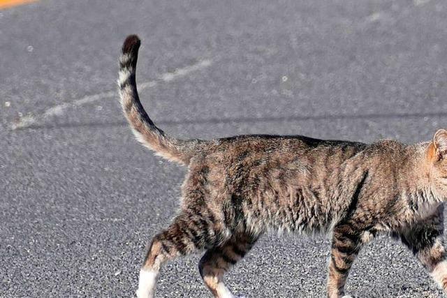 Junge Frau bremst wegen einer Katze – und fährt in einen Graben