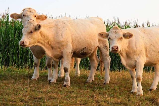 Landwirte im Kreis Lörrach wollen Aufklärungsarbeit leisten