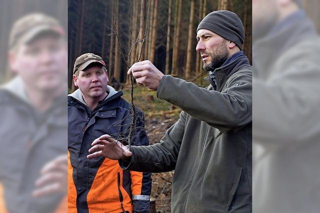 100 Freiwillige pflanzen 1000 Bäume