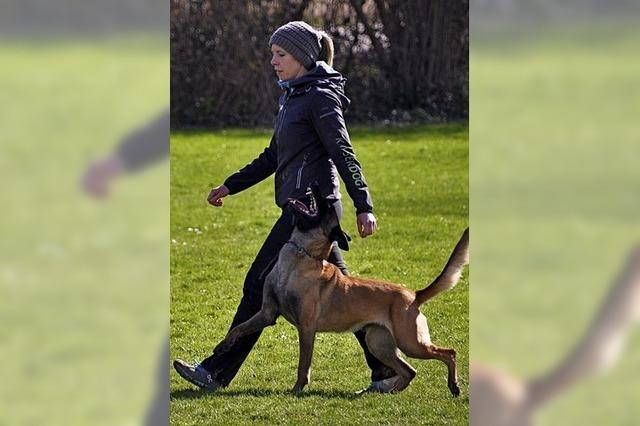 Regelmäßiges Training der Hundefreunde zahlt sich aus