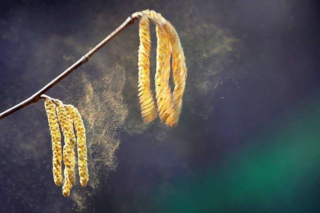 Eine Forscherin aus Wien kommt Mördern auf die Spur – mit Pollen