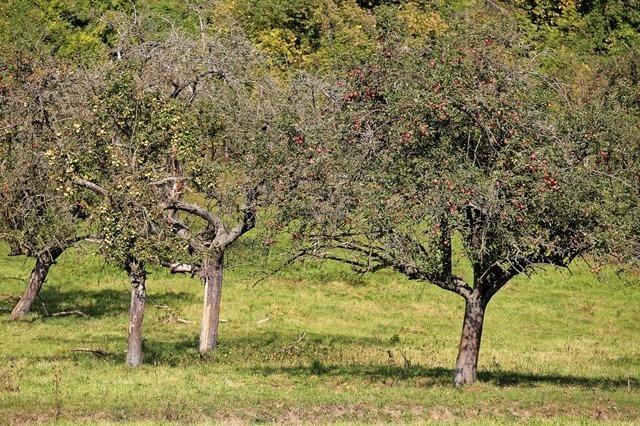 NABU-Biotoppflege im Kreis Lörrach