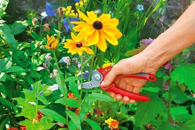 Welche Gartenschere nutzt man wofür?