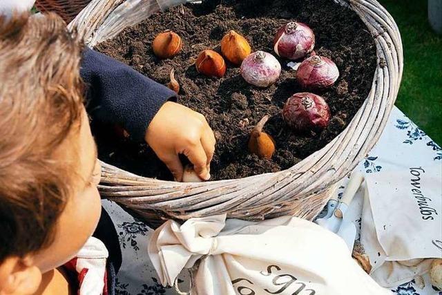 Ehrenkirchener Landfrauen starten Sammelaktion für Blumenzwiebeln