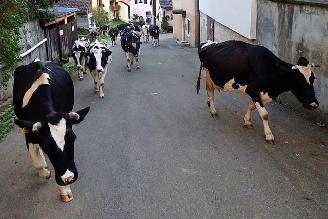 Das löst Wehmut aus: Milch aus Müllheim-Feldberg gibt's nicht mehr