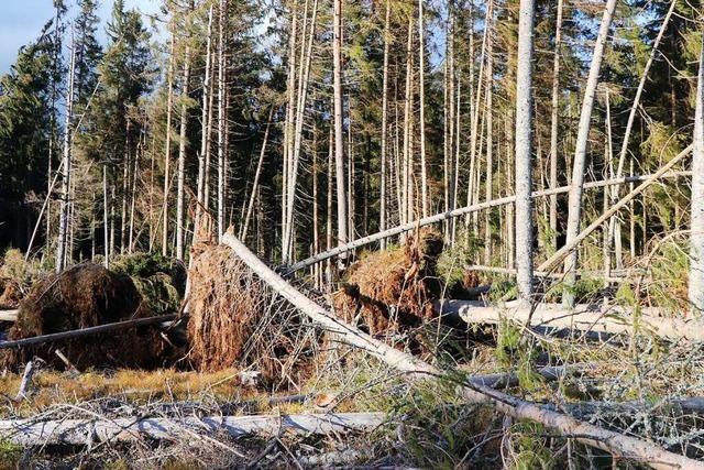 Forstbetriebsgemeinschaft warnt vor Leichtsinn im Wald