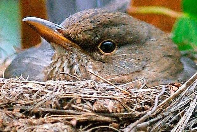 Vögel brüten wegen milder Temperaturen zum Teil früher
