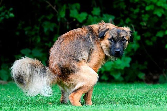 Ärger über Hundekot gibt es in vielen Gemeinden im südlichen Breisgau