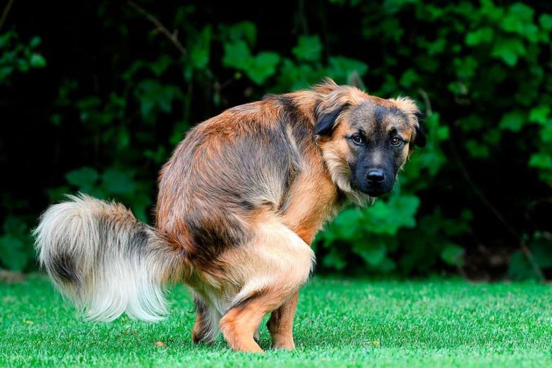Gleich sollte der Hundehalter zum Beutel greifen.     Foto: Carola Schubbel - stock.adobe.com