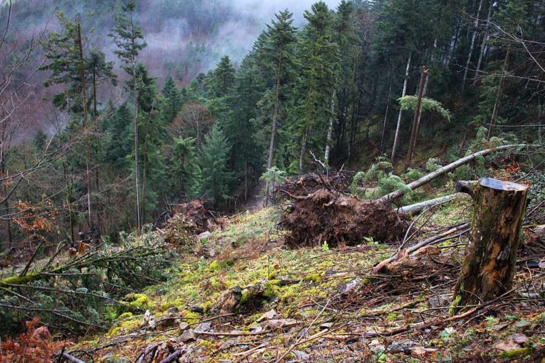 Nach dem Sturmtief Sabine lagen etlich...tzer Albert Schindler im Griesbachtal.  | Foto: Karin Heiß