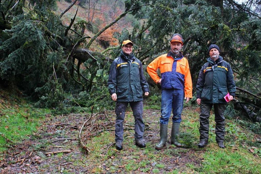 Forstbezirksleiter Dr. Frieder Hepperl...or einer mächtigen umgestürzten Tanne.  | Foto: Karin Heiß