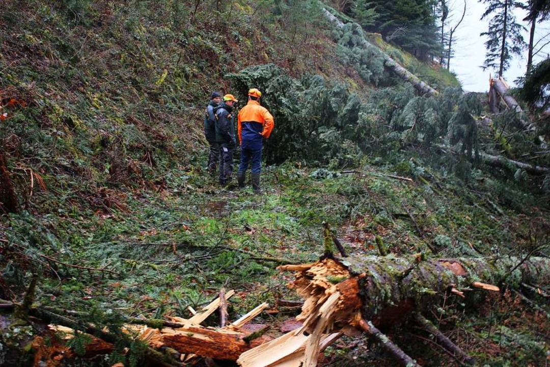 Forstbezirksleiter Frieder Hepperle, R...ehung der Sturmfläche im Griesbachtal.  | Foto: Karin Heiß
