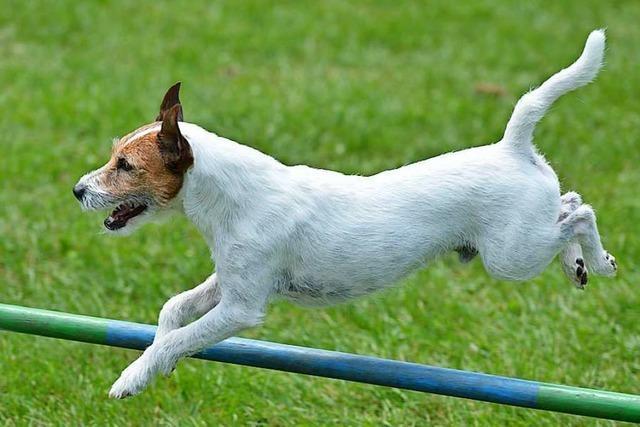 20 Mitglieder haben vergangenes Jahr den Hundesportverein verlassen
