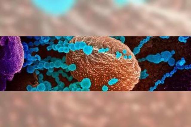 Coronavirus: Alles was Sie wissen müssen