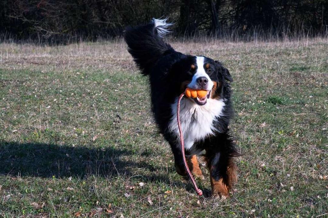 Auch wenn das Coronavirus grassiert – mit dem Hund spielen ist erlaubt.  | Foto: Volker Münch
