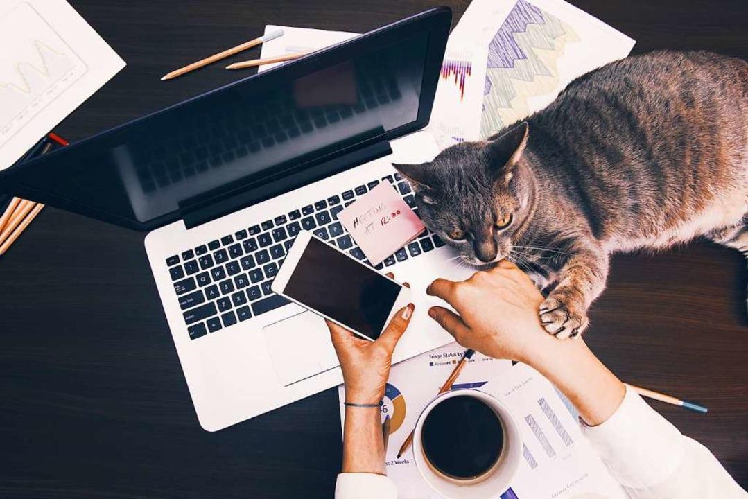 Im Home Office warten neue Kollegen, d... nicht immer erleichtern (Symbolbild).  | Foto: agcreativelab (Adobe Stock)